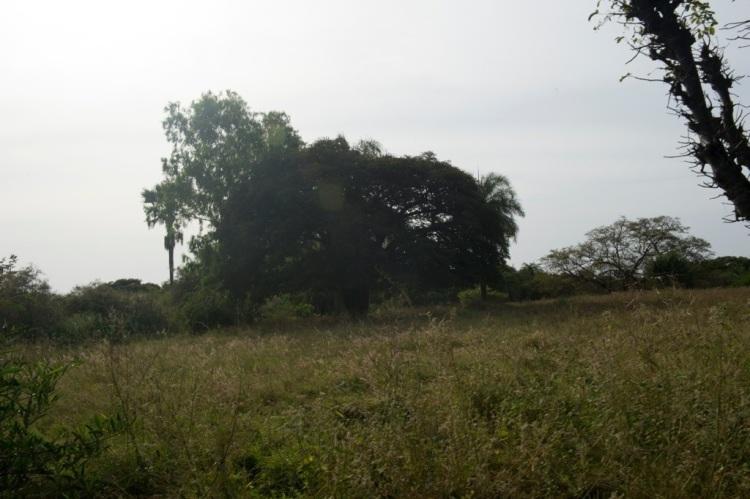 20121204-120017.jpg